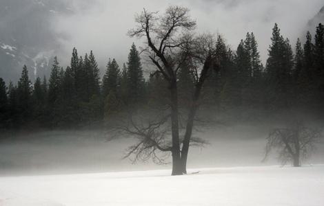 Yosemite2_FogTrees